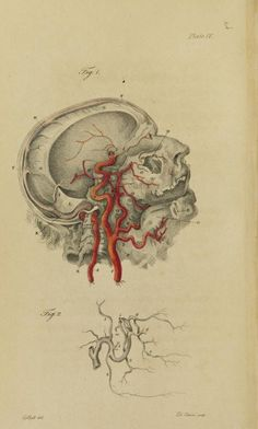 Engravings of the arteries by John and Charles Bell