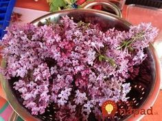 Tonight I'm off to Salmon Fishing in the Yemen. With Ewan McGregor (I wish). Not much time for cooking means pulling another quick and easy recipe out of the bag. Lilac Tree, Salmon Fishing, Wine Making, Canning Recipes, Quick Easy Meals, Preserves, Pickles, Cooking Tips, Herbalism