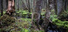 Naturreservatet Nordsjöskogen har en rik flora av mossor och lavar med förekomst av flera sällsynta och hotade arter.