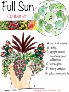 all my friends are flowers: full sun container planting plan.- all my friends are flowers: full sun container planting plan, annuals all my friends are flowers: full sun container planting plan, annuals - Full Sun Planters, Full Sun Container Plants, Sun Plants, Container Flowers, Sun Loving Plants, Plants For Full Sun, Planters For Front Porch, Full Sun Annuals, Potted Plants Patio