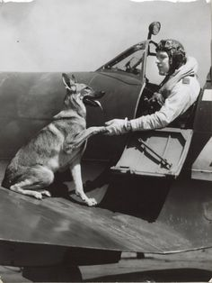 Australian Spitfire pilot Squadron Leader Bocock and Sally Military Working Dogs, Military Dogs, Military Art, Military Diorama, Ww2 Aircraft, Fighter Aircraft, Photo Avion, Airplane Pilot, War Thunder
