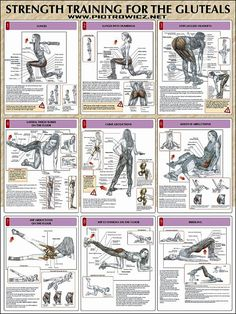 Ejercicios - Fitness - Strength Training For The Glutes Chart Fitness Workouts, At Home Workouts, Fitness Motivation, Butt Workouts, Training Workouts, Body Fitness, Health Fitness, Hip Strengthening Exercises, Isolated Glute Exercises