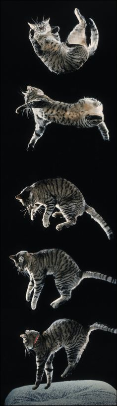 Interesting image of a cat landing on its feet.