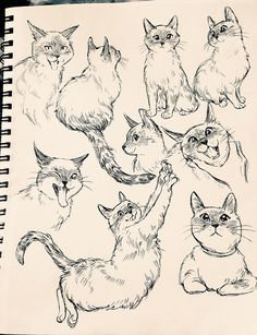 Marvelous Drawing Animals In The Zoo Ideas. Inconceivable Drawing Animals In The Zoo Ideas. Cute Cat Drawing, Cute Animal Drawings, Animal Sketches, Cute Drawings, Cat Drawing Tutorial, Drawing Ideas, Warrior Cats, Cat Sketch, Cat Tattoo