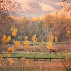 Quiet autumn morning in Littleton, Colorado. Photo courtesy of thevisualsojourner on Instagram.