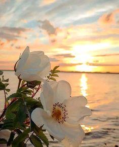 Landscape shot of the day 📷 Artist : 💥 Congratulations : 🎉 🏆 🎉 ~ ~ ~ ~ ~ ~ ~ ~ ~ ~ ~ ~ ~ ~ ~ ~ ~ ~ Friends please join us… Beautiful Flowers Wallpapers, Beautiful Nature Wallpaper, Pretty Wallpapers, Beautiful Roses, Pretty Flowers, Beautiful Landscapes, Beautiful Life, Flower Phone Wallpaper, Beach Wallpaper