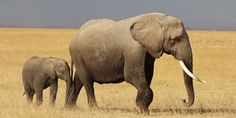 Stop Export of Zimbabwe's Baby Elephants!