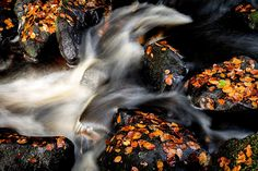Padley Gorge Abstract - Peak District