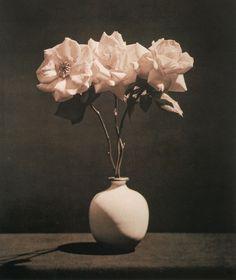 Robert Mapplethorpe, Pink Roses, 1983.