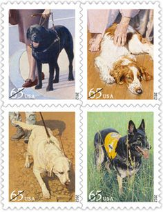 U.S. Postal Service is releasing four new stamps honoring service dogs. The paintings, by John Thompson, feature dogs in four lines of work: a black Labrador guide dog assisting a visually impaired woman, a Welsh Springer Spaniel therapy dog comforting the elderly, a yellow Lab military tracking dog, and a German Shepherd search-and-rescue dog. They will appear on a series of 65-cent stamps, used for heavier (one to two ounces) first-class mail