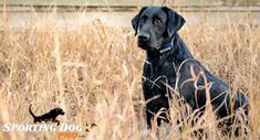 """Teaching Your Dog the """"Stop"""" Command - #DogTraining #HuntingDogs"""