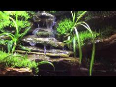 Paludarium 2 week update waterfall