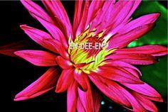 Australian Artist EM-DEE-EM Original Photograph ~ Digital Image ~ Marvel1 3015-1