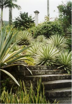 Roberto Burle Marx was deftly able to transfer traditional artistic expressions such as graphic design, tapestry and folk art into his landscape designs. He also designed fabrics, jewellery and stage sets.