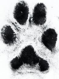 side paw print tattoo - Google Search