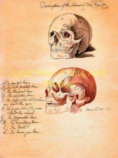 latest addition Anatomy – Anatomical Illustrations Clorion 1830g
