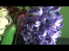 ▶ Time Lapse of Flowers Blooming - YouTube