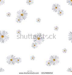 white daisy flower pattern background