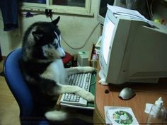 This programmer with laser focus. | 21 Dogs Who Take Their Jobs Very Seriously