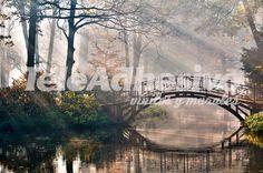 Fototapeten: Puente en el bosque 2