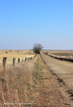 limestone fence in Kansas. My uncle's fence has limestone posts in it.