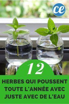 12 Herbes Que Vous Pouvez Faire Pousser Toute l'Année JUSTE AVEC DE L'EAU. #bricolagejardin