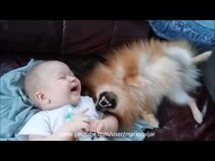 ▶ 5 months old baby playing with pomeranian puppy - YouTube