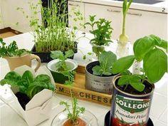 making new veggies out of old ones. Water Garden, Herb Garden, Indoor Garden, Hydroponic Gardening, Hydroponics, Inside Garden, Sustainable Food, Growing Herbs, Edible Garden