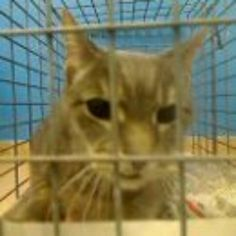 Brooklyn NY.  Freedom.  Neutered 7 yr. old male.  Dies in a.m.  See Pets on Death Row- Urgent Death on fb.
