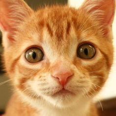 Simon's Cat Asks... Cole & Marmalade
