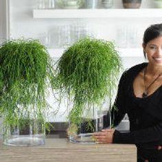 http://www.jardiner-malin.fr/fiche/plante-verte-tendance-mode.html