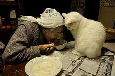 Amistad y dignidad… Miyoko Ihara Crazy Cat Lady, Crazy Cats, Unusual Animal Friendships, Animals Beautiful, Cute Animals, Son Chat, Japanese Cat, Cat Behavior, Cat People