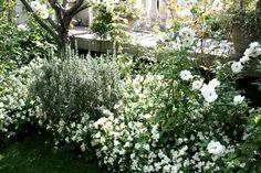 Le jardin secret de la maison Herm Eva Garden, Moon Garden, Dream Garden, Pretty Flowers, White Flowers, Garden Gadgets, Midnight Garden, David Austin Roses, Diy Greenhouse