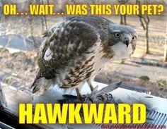 HAWKWARD!
