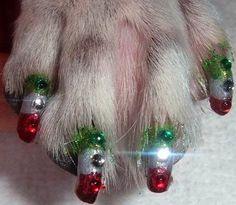 Dog nails Christmas
