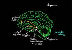 Reward pathway in the brain