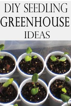 Gardening Indoor Start your seedlings indoors now with these great ideas! Have a bigger garden this year! - Just because it's snowing outside doesn't mean you can't get a head start on your garden for next year.