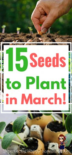 15 Vegetable, Herb and Fruit Seeds You Can Plant in March. Get your spring and summer garden off to a great start!