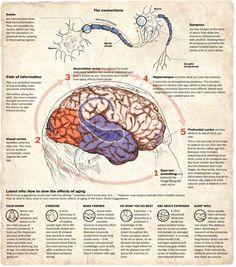 The aging brain - The Washington Post