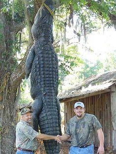 Florida Hunts, Florida Hunting Outfitters, Florida Hunting Guides offering Gator, Hog, Osceola Turkey, Deer and Exotic Game Hunts!  http://www.worldclassoutdoors.com/florida-hunts