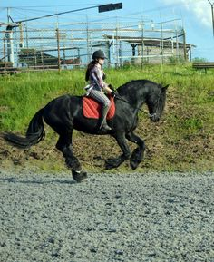My friesan stalion   Riding without saddle  #horse