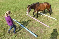 7 Knobelaufgaben für Ihr Pferd