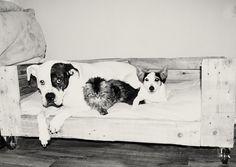 Wood / Pallet dog bed / basket.