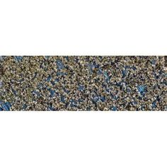 Close-up of barnacles on wall Southeast Alaska Alaska USA Canvas Art - Panoramic Images (36 x 12)