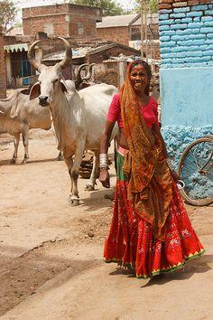 Rajastan | Rajasthan. Cows roam freely ~Repinned Via Aini Arif