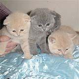 Кошачьи новости