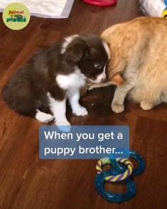 Funny Animal Jokes, Funny Animals, Cute Animals, Animals And Pets, Baby Animals, Puppy Brother, Cute Stories, Cute Animal Pictures, Animal Quotes
