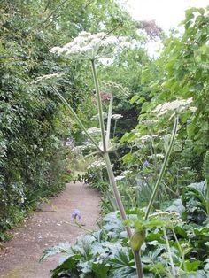 Heide garden