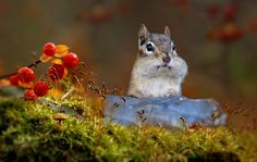 Almost full cheeks by Irene on 500px