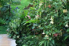 Princeville Botanical Gardens (taste fruits and chocolates) - Princeville, Kauai, Hawaii